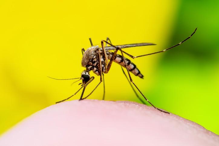 best mosquito control