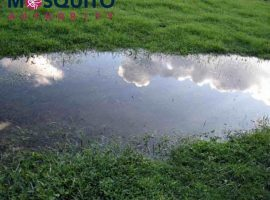 One of the best ways to get rid of mosquitoes is to eliminate standing water